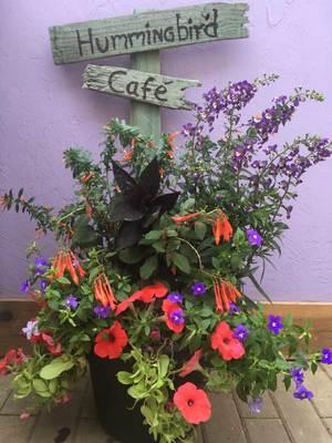 Sat Jul 03 2021 Hummingbird Cafe